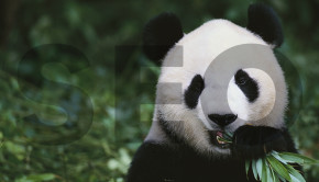 090214 Post-Panda SEO Tactics for Startup Tech Companies